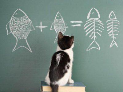 smart cat incopy 533029935 e1554689133263