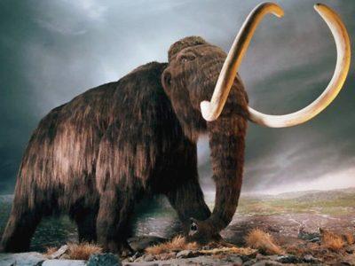 Il ritorno dei mammut