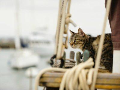 La strana avventura di un gatto