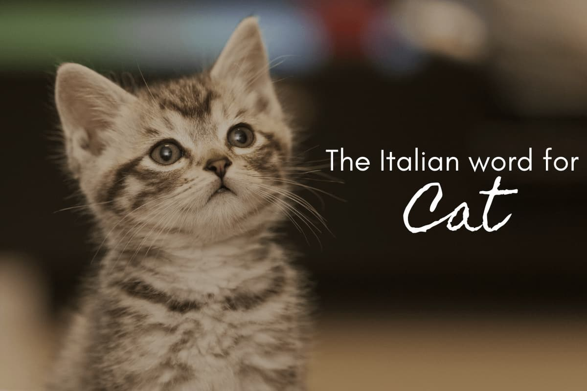The Italian word for cat