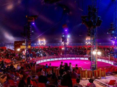 italian conversation circus