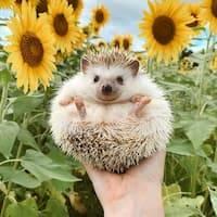 italian idioms with animals
